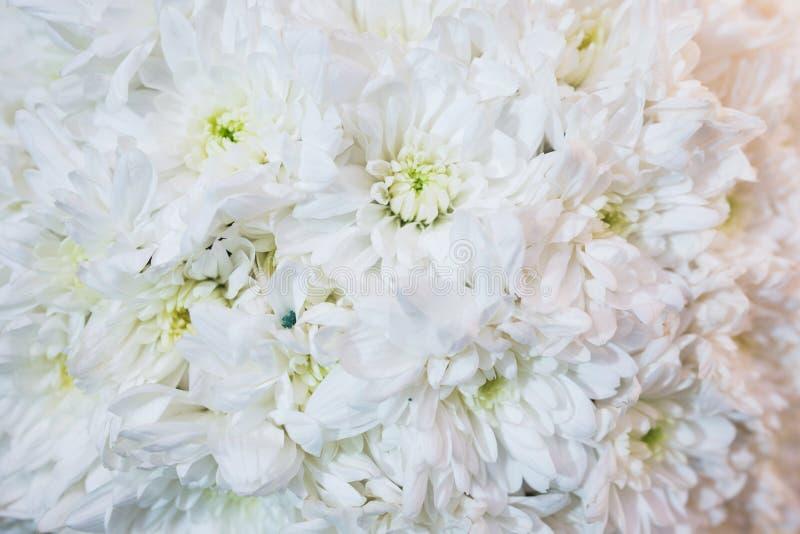 Bello primo piano festivo del mazzo Mazzo luminoso dei fiori bianchi come regalo fotografie stock