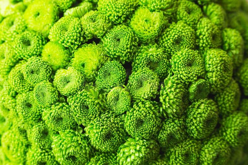 Bello primo piano festivo del mazzo Mazzo luminoso dei fiori verdi come regalo fotografie stock libere da diritti