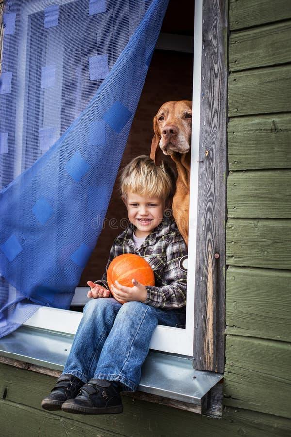 Bello ragazzo biondo che si siede sul davanzale della finestra con la zucca ungherese della tenuta e di vizsla fotografia stock libera da diritti
