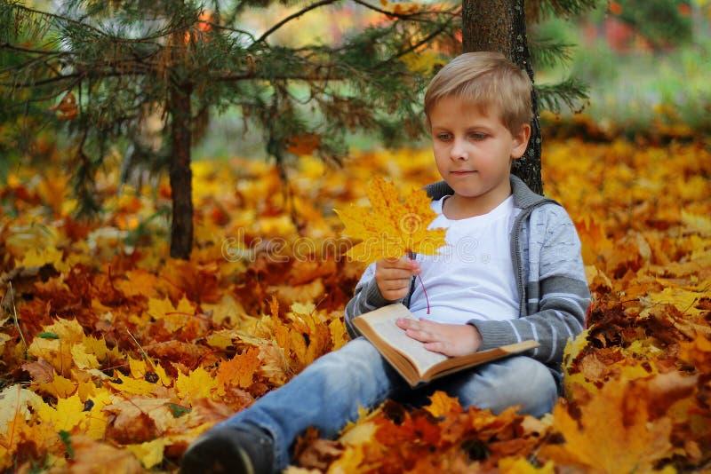 Bello ragazzo che si siede sotto un albero di acero immagine stock