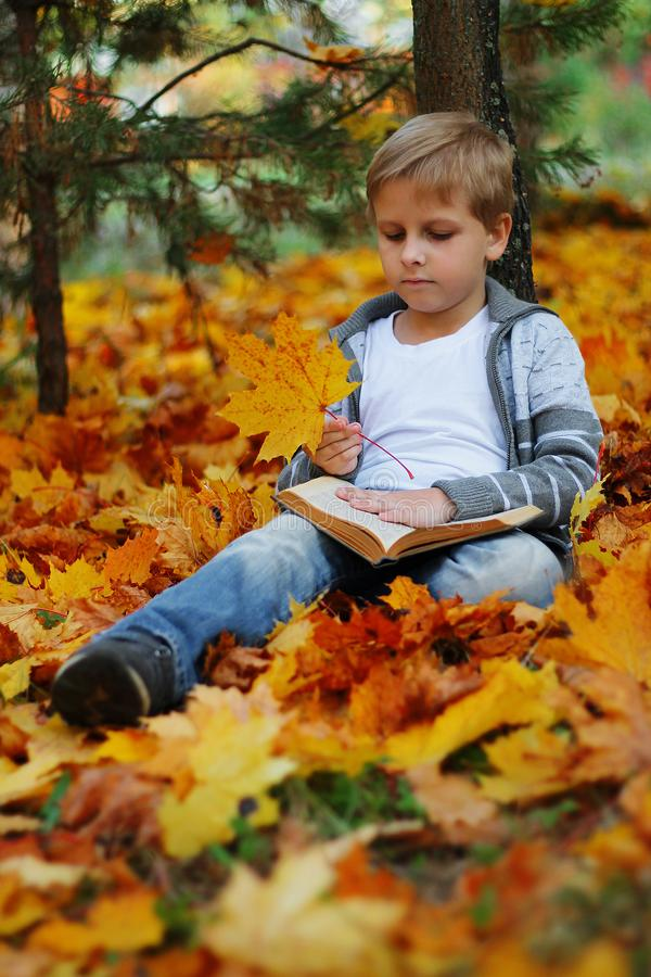 Bello ragazzo che si siede sotto un albero di acero fotografia stock libera da diritti