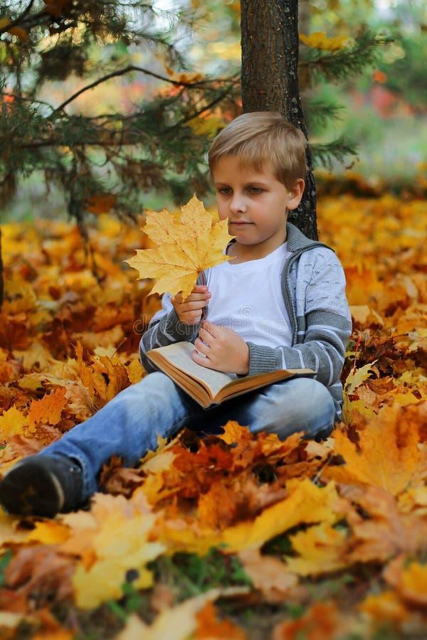 Bello ragazzo che si siede sotto un albero di acero fotografia stock