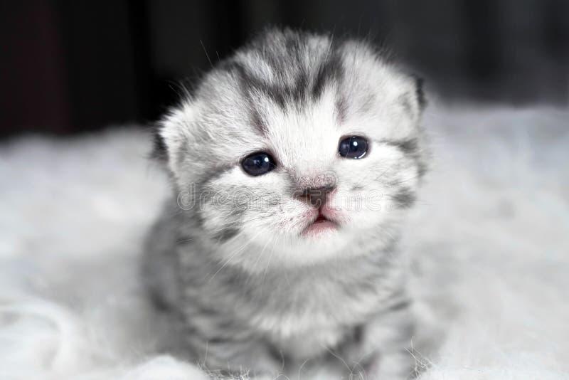 Bello ritratto del gattino gattino del bambino adorabile immagine stock libera da diritti