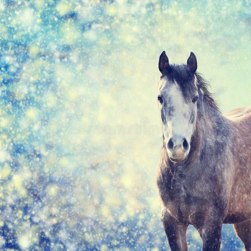 Bello ritratto grigio del cavallo sul fondo di inverno delle precipitazioni nevose immagine stock libera da diritti