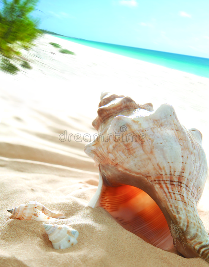 Bello Seashell fotografia stock