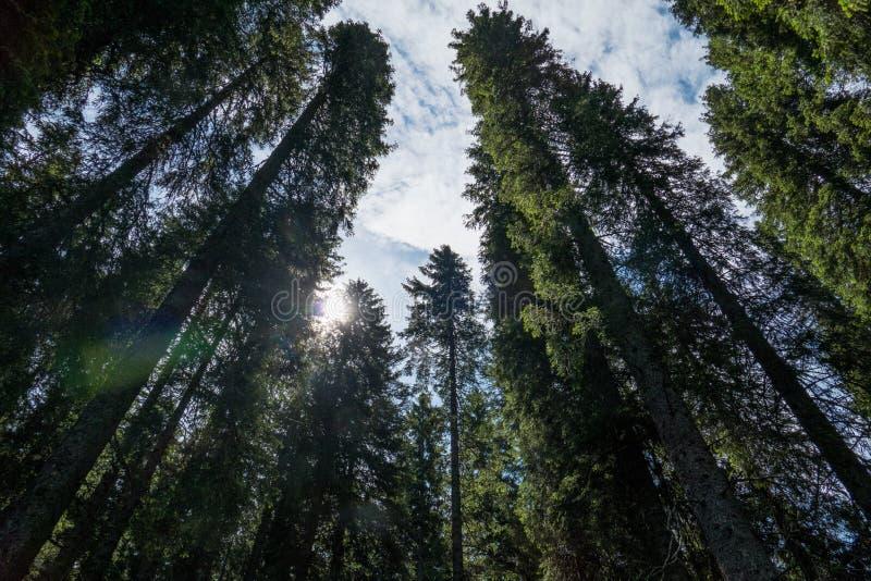 Bello Sunny Forest Against Sky immagini stock libere da diritti