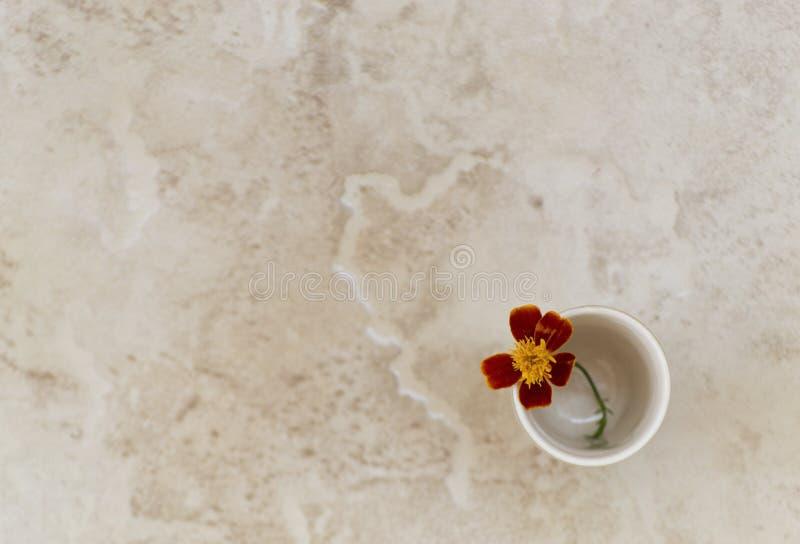 Bello tagete dei fiori Fiore in vaso immagini stock libere da diritti