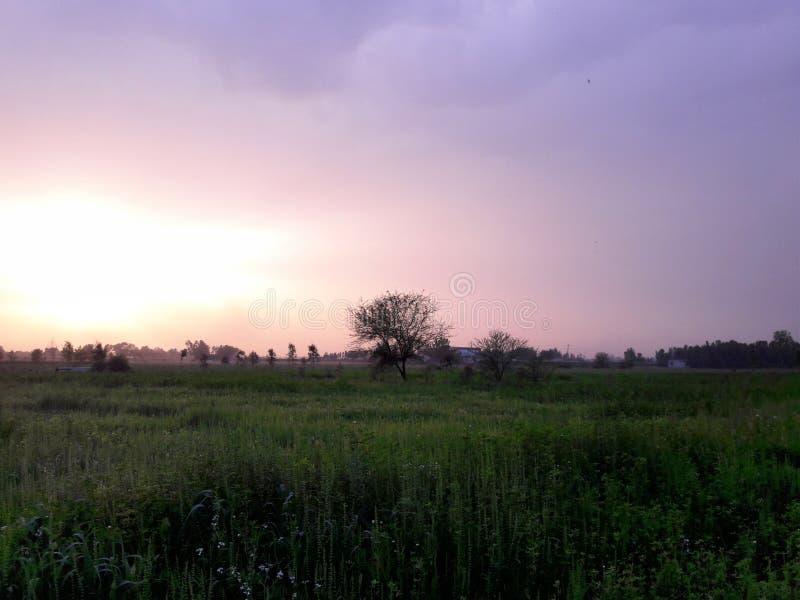Bello tramonto all'aperto con prato inglese verde fotografie stock libere da diritti