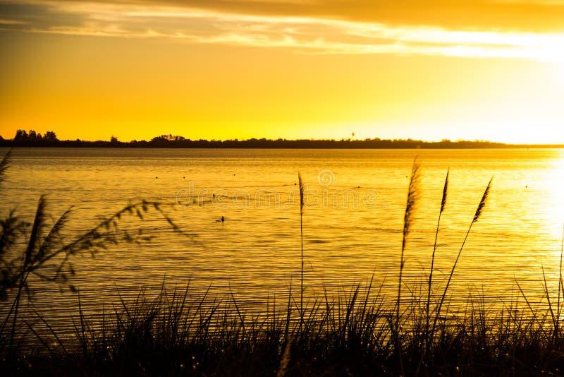 Bello tramonto, anatre che nuotano immagine stock