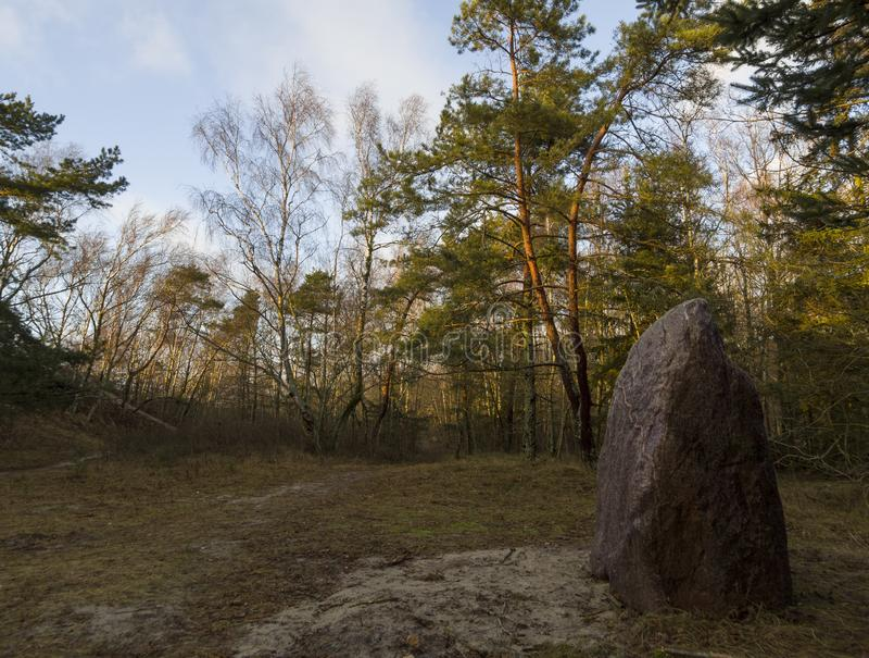 Bello tramonto di inverno in un'abetaia sul Mar Baltico in Lituania, Klaipeda immagine stock