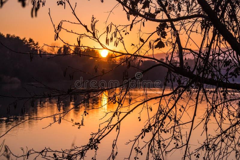 Bello tramonto sopra il lago con il fondo della siluetta dell'albero immagine stock libera da diritti