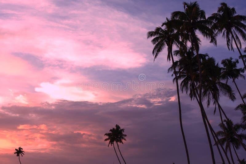 Bello tramonto tropicale con il silhoette delle palme alla spiaggia fotografie stock libere da diritti