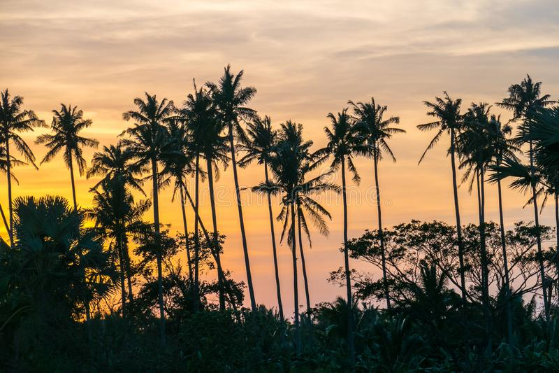 Bello tramonto variopinto sopra le palme fotografia stock libera da diritti