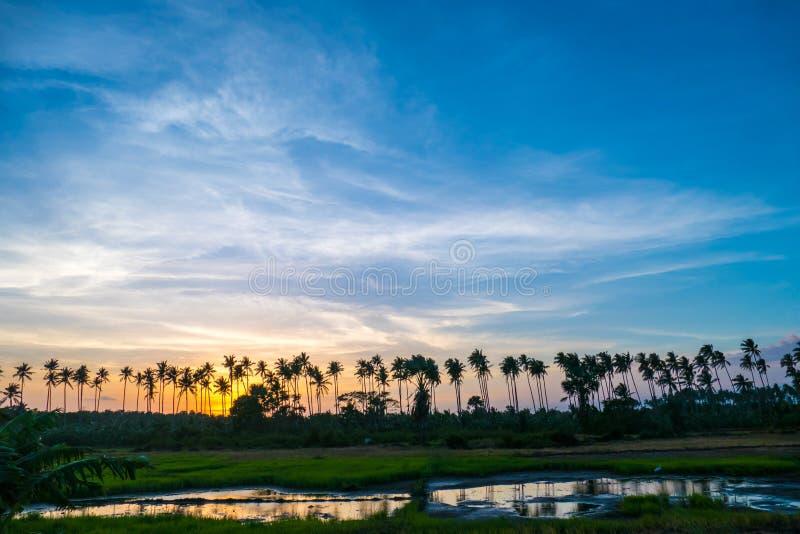 Bello tramonto variopinto sopra le palme ed il giacimento fotografia stock libera da diritti