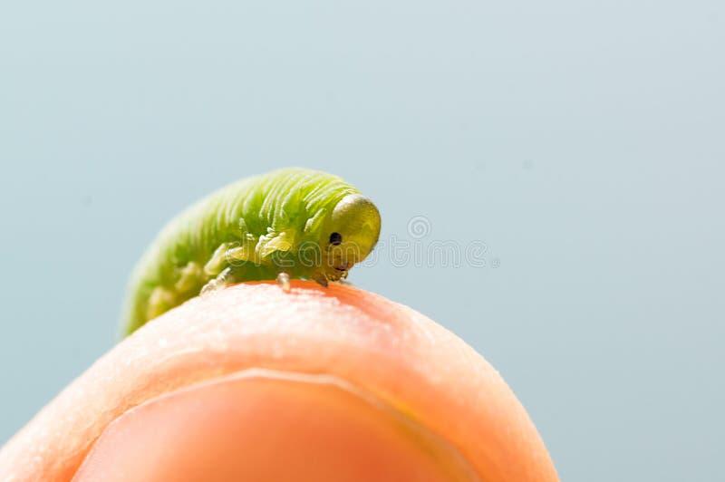 Bello trattore a cingoli sul dito, colpo felice di estate, bella creatura immagini stock libere da diritti