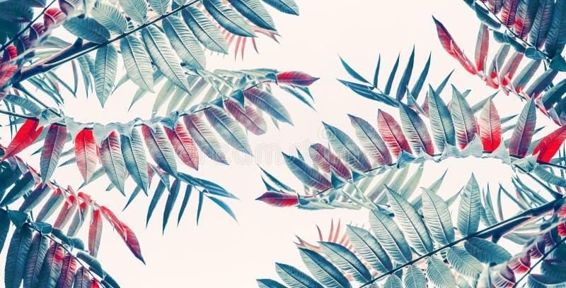 Bello tropicale o il dschungel lascia il fondo immagini stock libere da diritti