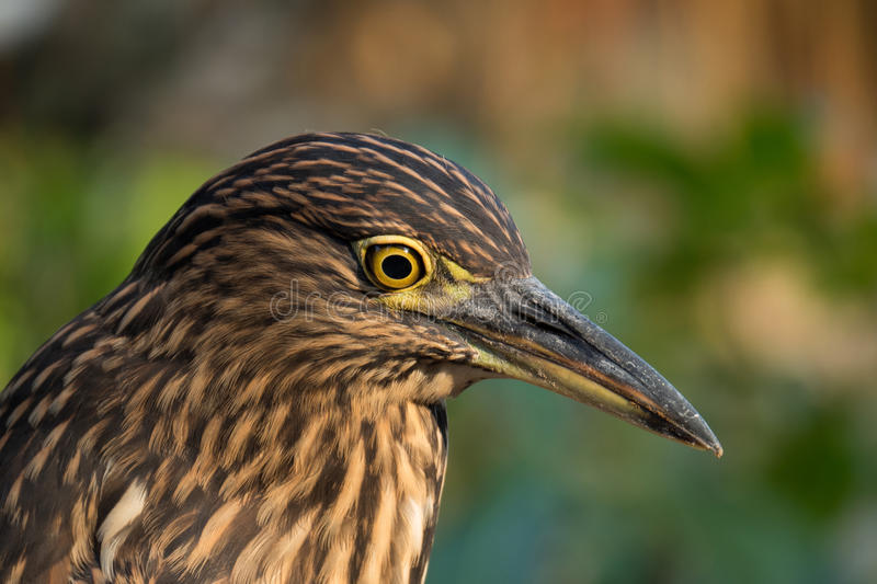 Bello uccello fotografia stock libera da diritti