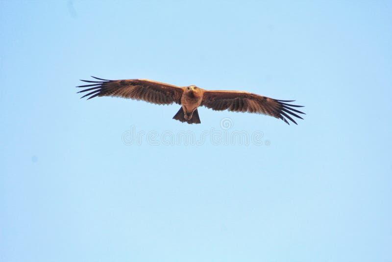 Bello uccello del Bangladesh con tempo nutural fotografie stock