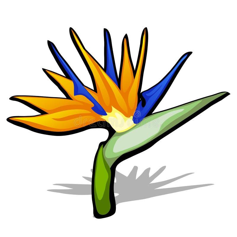 Bello uccello del fiore di paradiso, strelitzia reginae isolato su fondo bianco Illustrazione del primo piano del fumetto di vett illustrazione vettoriale