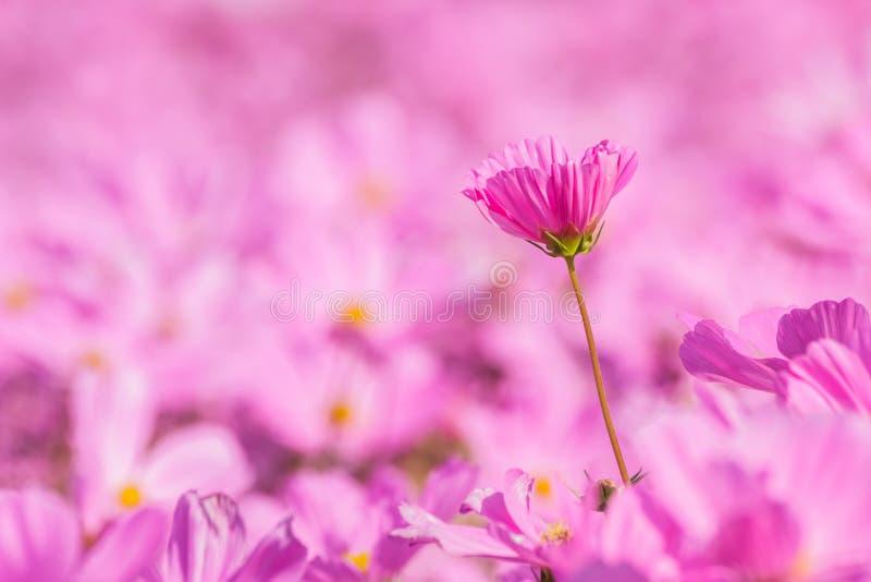Bello universo dei fiori su fondo morbidamente vago fotografia stock libera da diritti