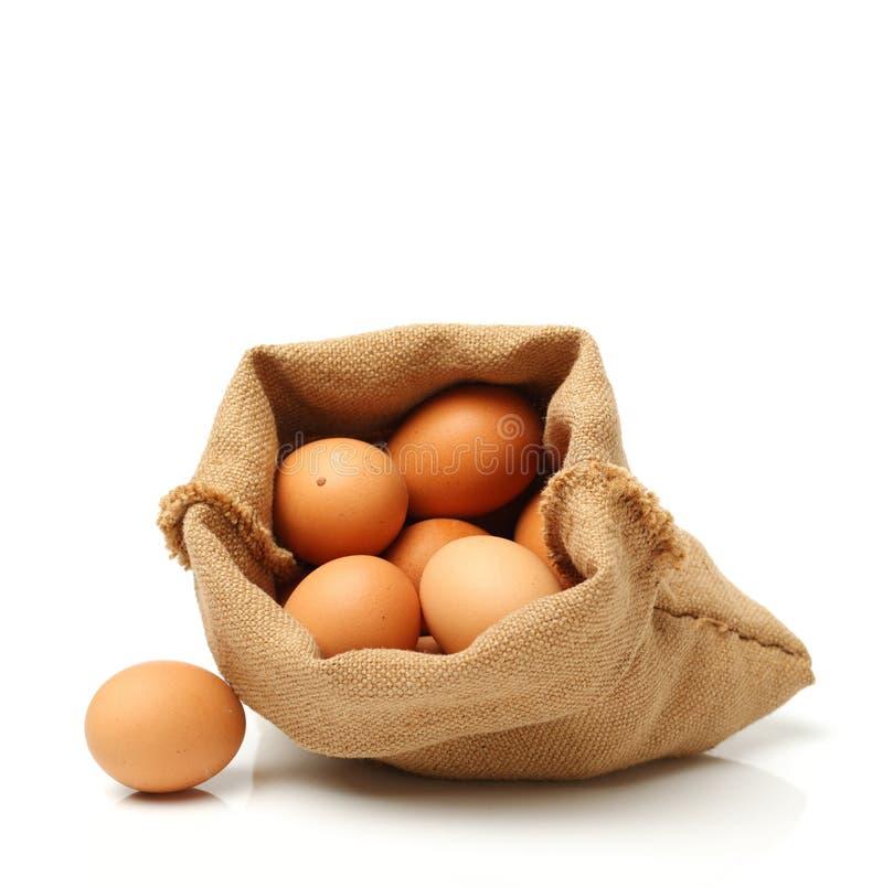 Bello uovo fotografia stock libera da diritti