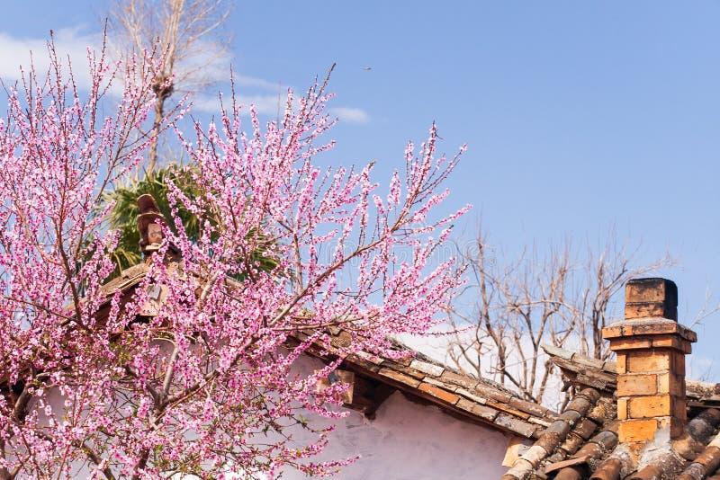 Bello vecchio cottage cinese affascinante con il camino e la fioritura fotografie stock libere da diritti