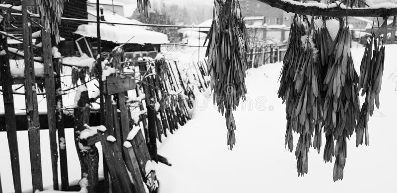 Bello vecchio recinto di legno sui precedenti di neve nell'inverno immagini stock