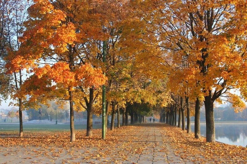 Bello vicolo dell'acero in autunno in anticipo fotografia stock libera da diritti