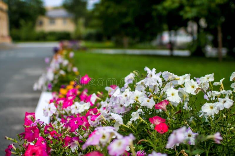Bello vicolo multicolore dei fiori fotografie stock