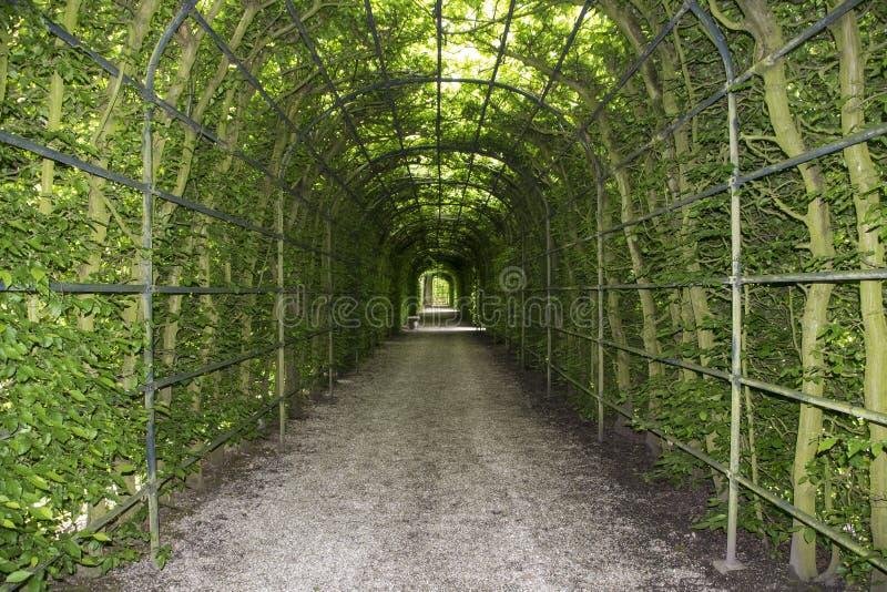 Bello vicolo in parco Percorso del vicolo del passaggio pedonale attraverso la pergola con le foglie verdi fotografie stock