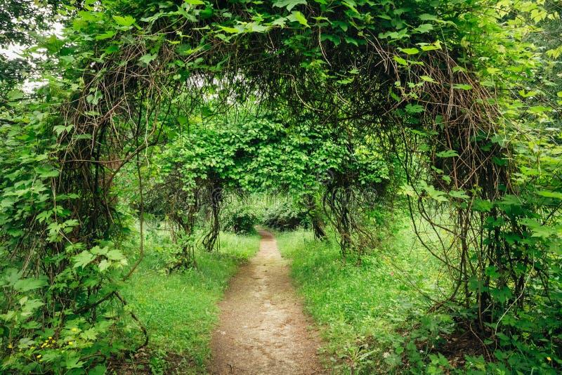 Bello vicolo in parco Progettazione d'abbellimento del giardino immagine stock libera da diritti