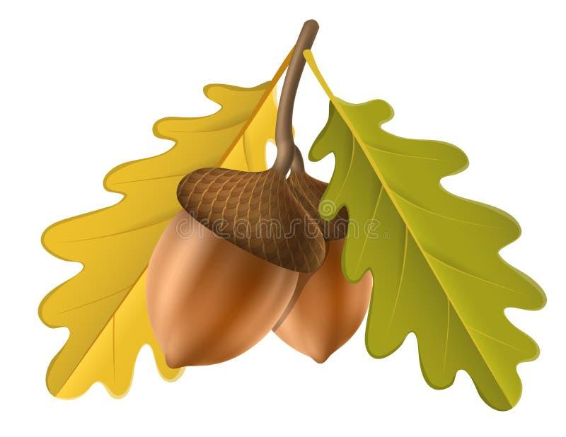 Bellota con la hoja para el otoño ilustración del vector