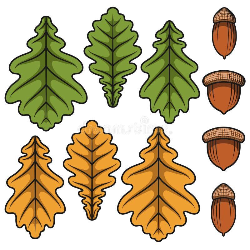 Bellotas del vector del color y hojas del roble Objetos aislados ilustración del vector