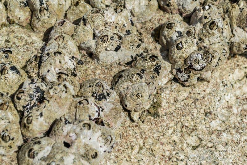 Bellotas en el fondo de piedra, primer de Yellow Sea fotografía de archivo