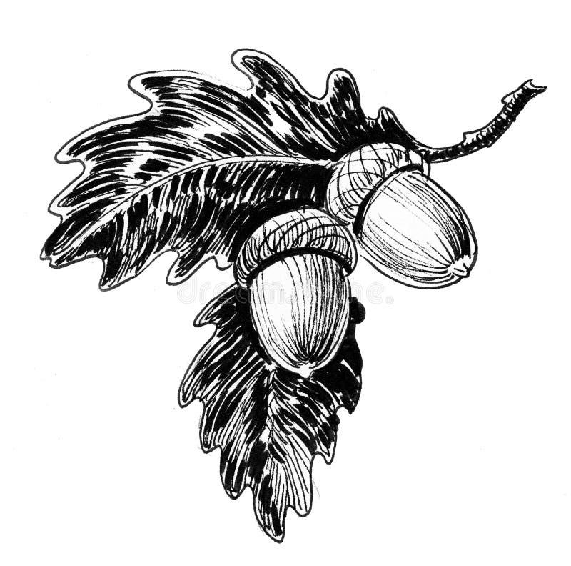 Bellotas en el roble libre illustration