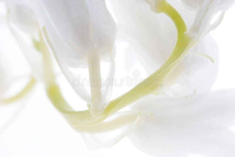 Download Bells blanches image stock. Image du flore, details, doux - 739537