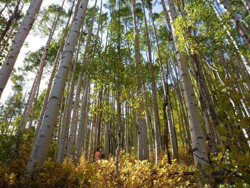 Download Bells Marron, Montagne, Lac, Aspen, Co Photo stock - Image du maroon, automne: 87709084