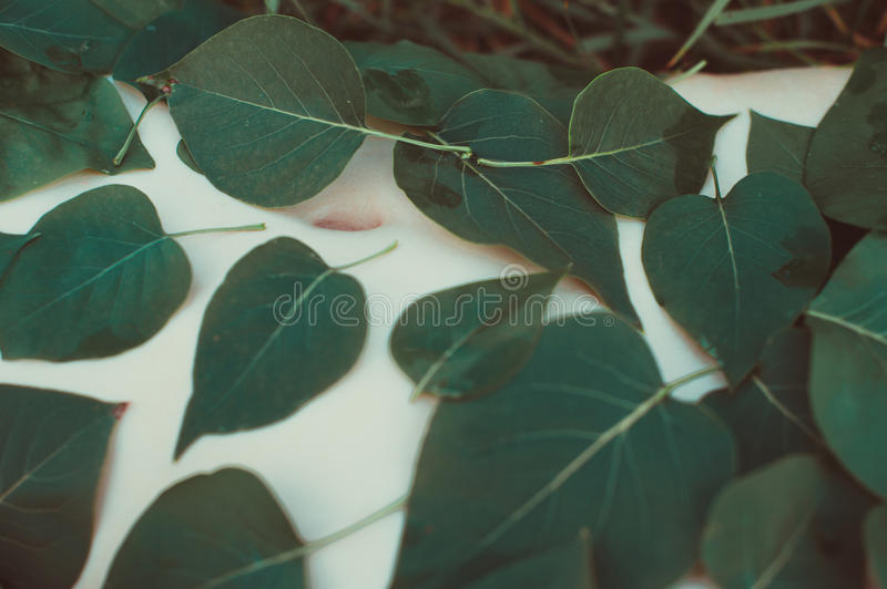 Belly of a young girl covered with leaves stock photo
