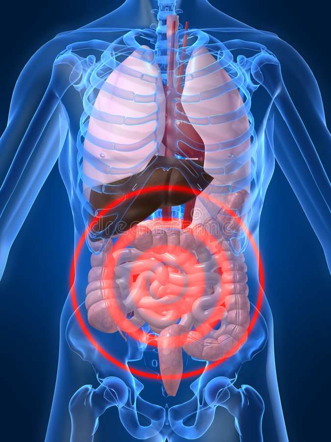 Bellyache. 3d rendered illustration of a human anatomy with bellyache royalty free illustration