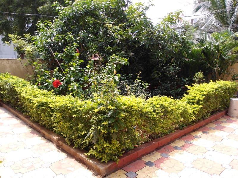 Belo jardim da esquina Greenery fotos de stock royalty free