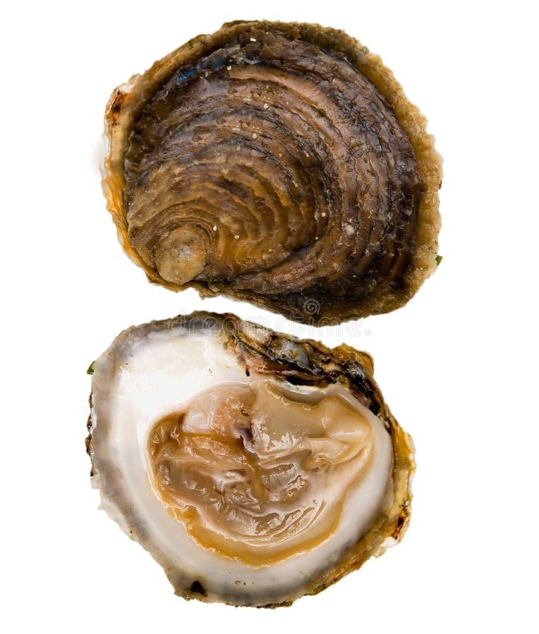 belon牡蛎 库存图片