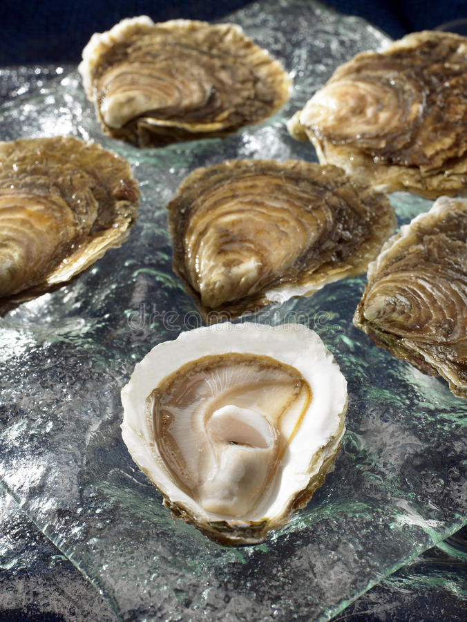 Download Belon flat oysters stock image. Image of open, color - 23703099