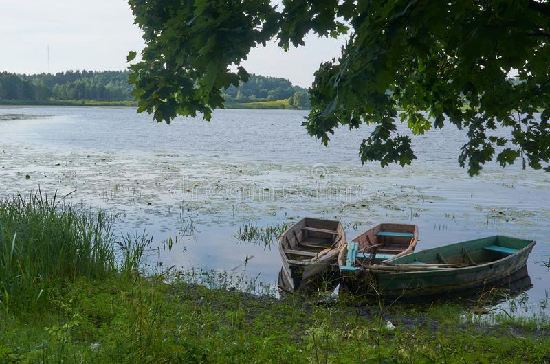 The Belorussian lake in summer royalty free stock photos