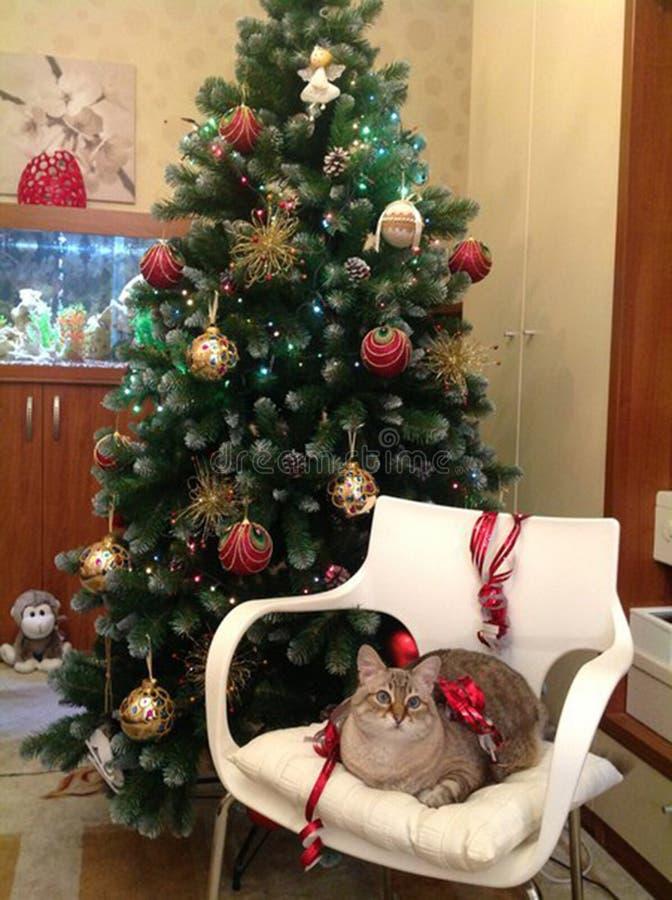 Cat Dasha. royalty free stock photography
