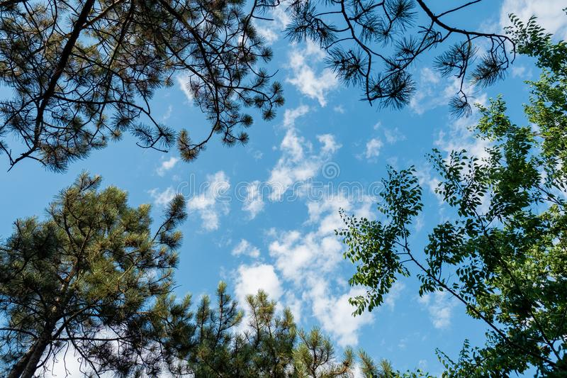 Below trees view frame leaves branches blue sky clouds. Daylight stock image