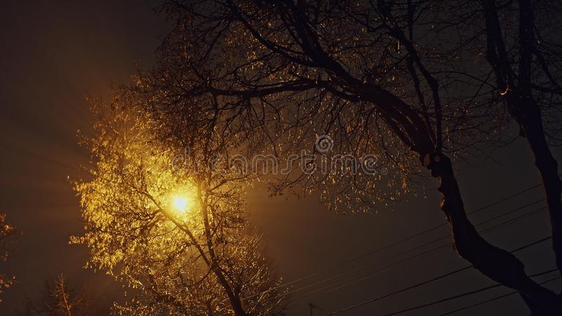 From below view of lamppost glowing with golden light in tree branches in night time royalty free stock photos