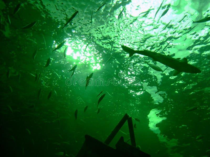 Belowe l'oceano fotografie stock libere da diritti