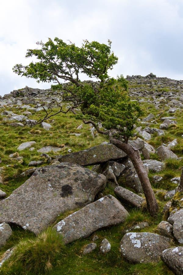 Belstone Tor na Dartmoor obrazy stock