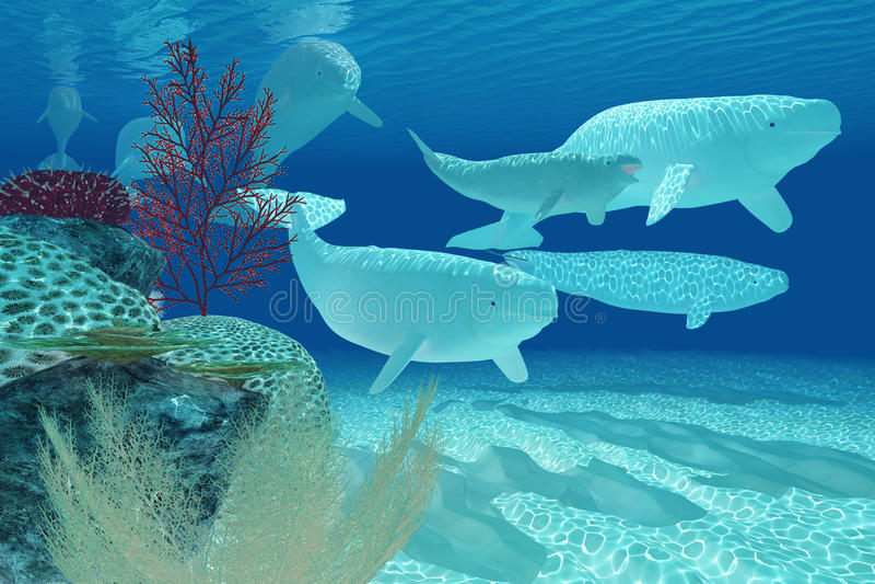 Belugas stock abbildung