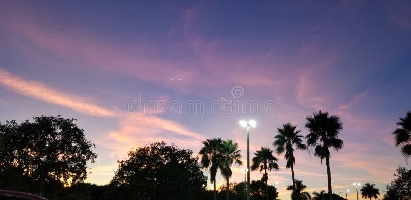 Belysning av SkyLine med skugga av träd arkivbilder